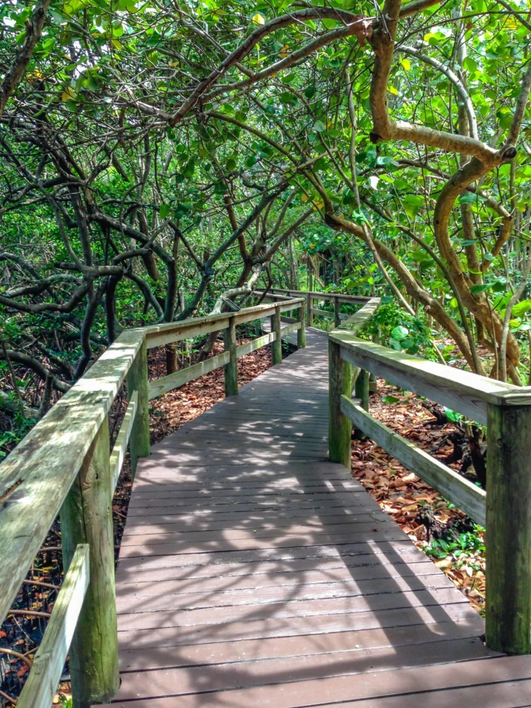 Marie Selby Botanical Gardens – The Intrepid Life